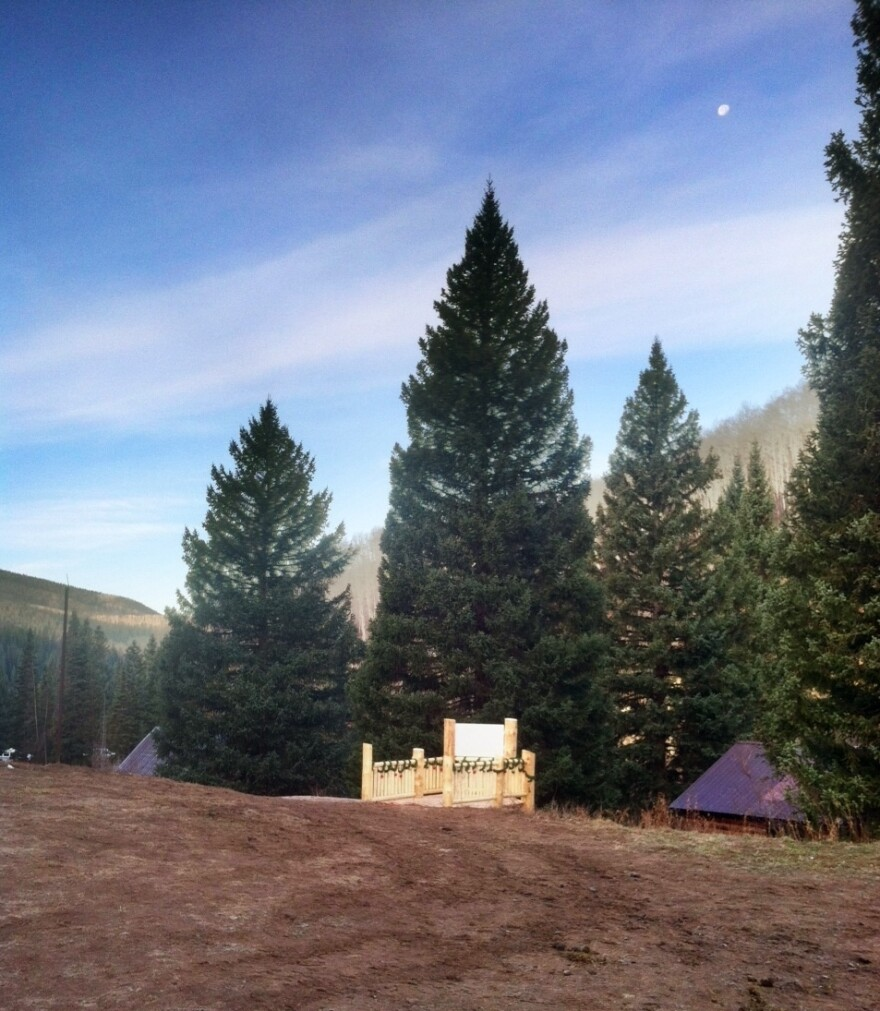 This year's Capitol Christmas Tree comes from White River National Forest in Northwest Colorado. The spruce is more than 70 feet tall.