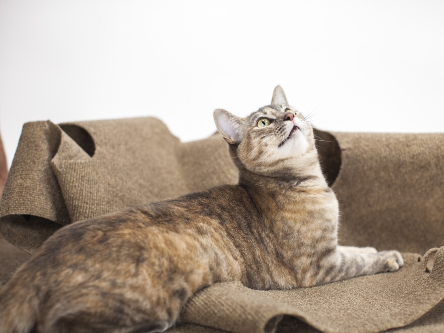 Fred and Natasha Ruckel's cat, Yoda, sits on top of the Ripple Rug. The Ripple Rug was the subject of a classic middleman scheme involving eBay and Amazon.