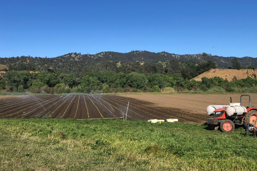 Full Belly Farm, a 450-acre, organic farm, in California's Capay Valley northwest of Sacramento, is busier than ever trying to ramp up production to meet soaring demand.