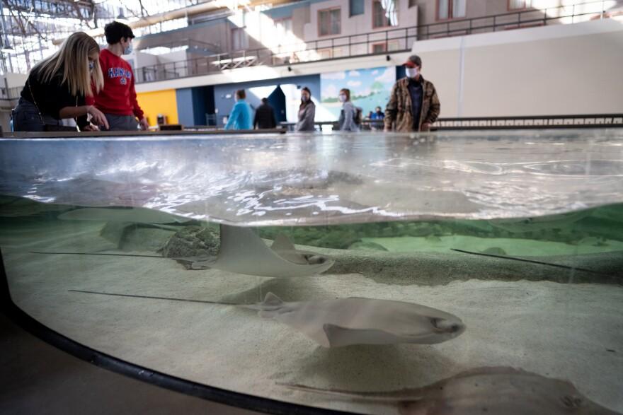 The St. Louis Aquarium at Union Station