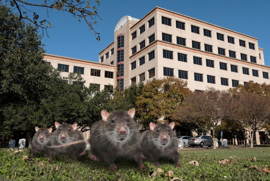 rats-hhs.jpg