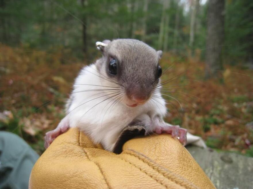 squirrel-close-up-1024x768_0.jpeg