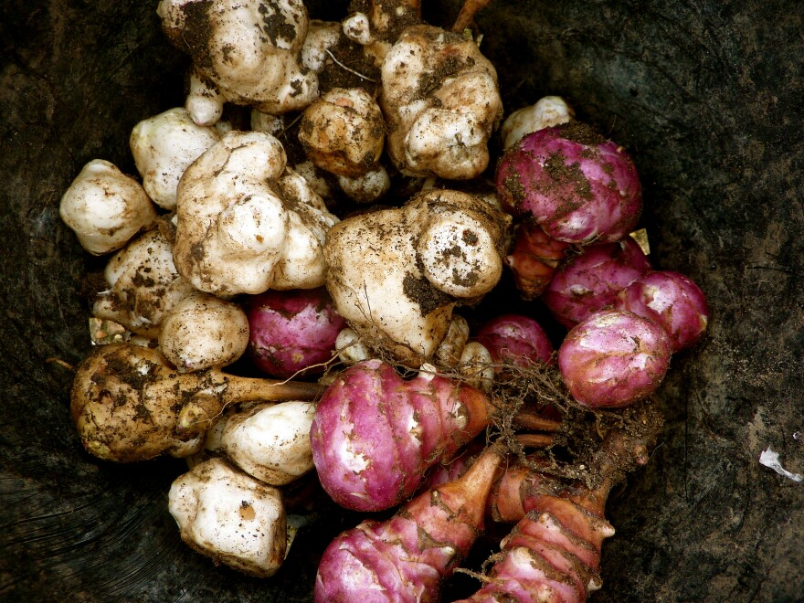 Bury a few Jerusalem artichokes in your backyard, and you'll have summer sunflowers, followed by a crop of tubers.