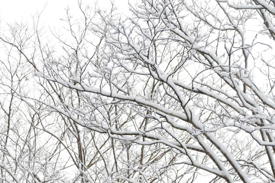 snow_charlotte_2018.JPG