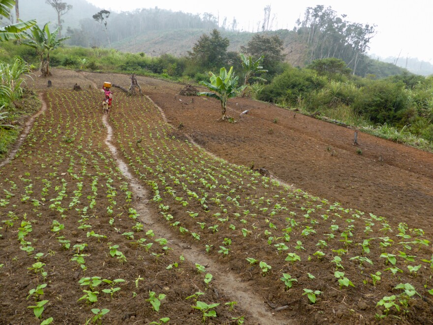 To make up for the loss of farming income from clear-cutting forest land, Conservation International trained farmers in new pursuits, from beekeeping to raising poultry.