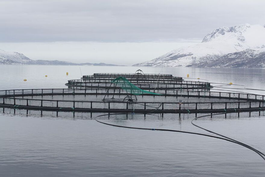 Offshore fish cages