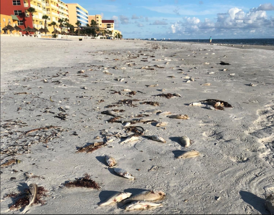 Dead fish on the beach during the summer of 2018.