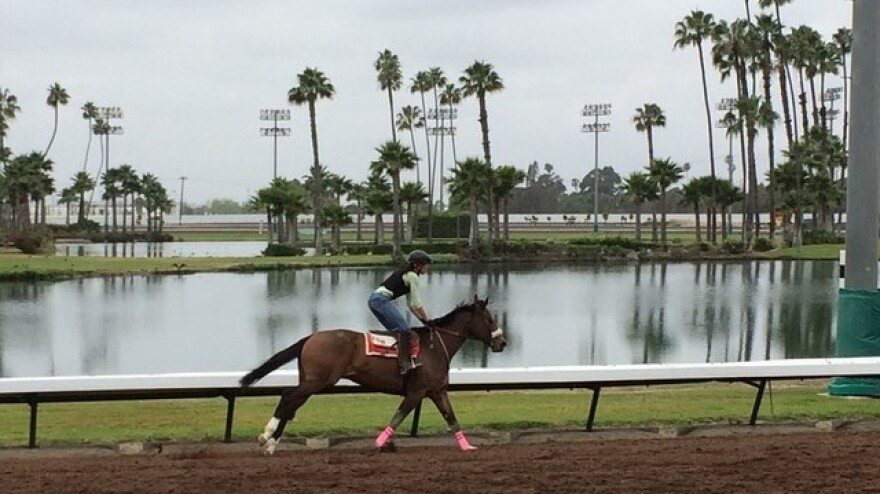 California Chrome is a favorite in Saturday's Derby, even though he doesn't fit the expensive mold of his competitors.