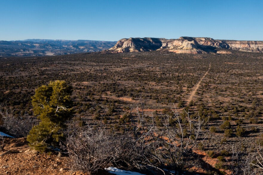 Photo of a vista looking out over a dirt road, rows of pine trees and white canyon walls.