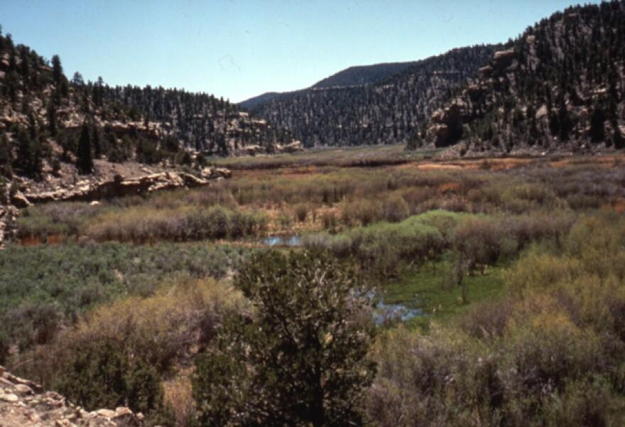 UT9145-Cunningham-Ranch-2.jpg