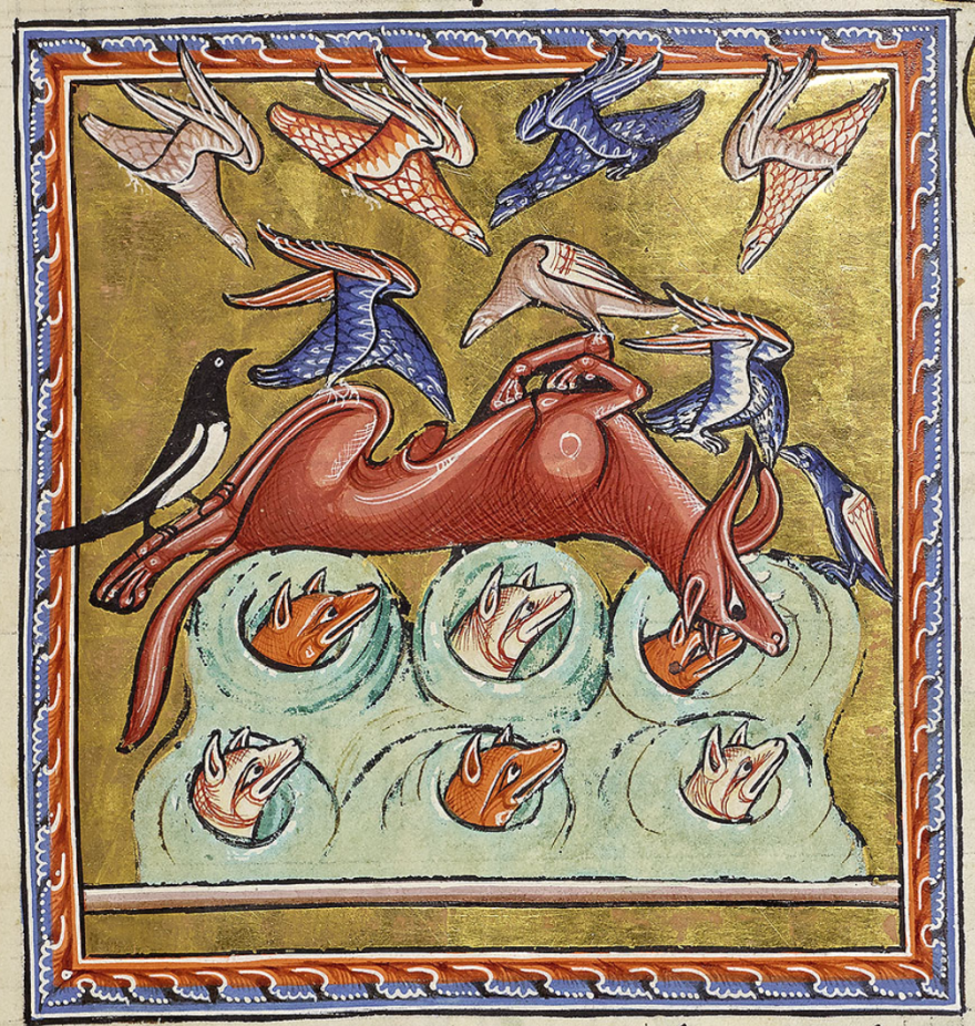 The Fox Aberdeen Bestiary - What Am I Looking At