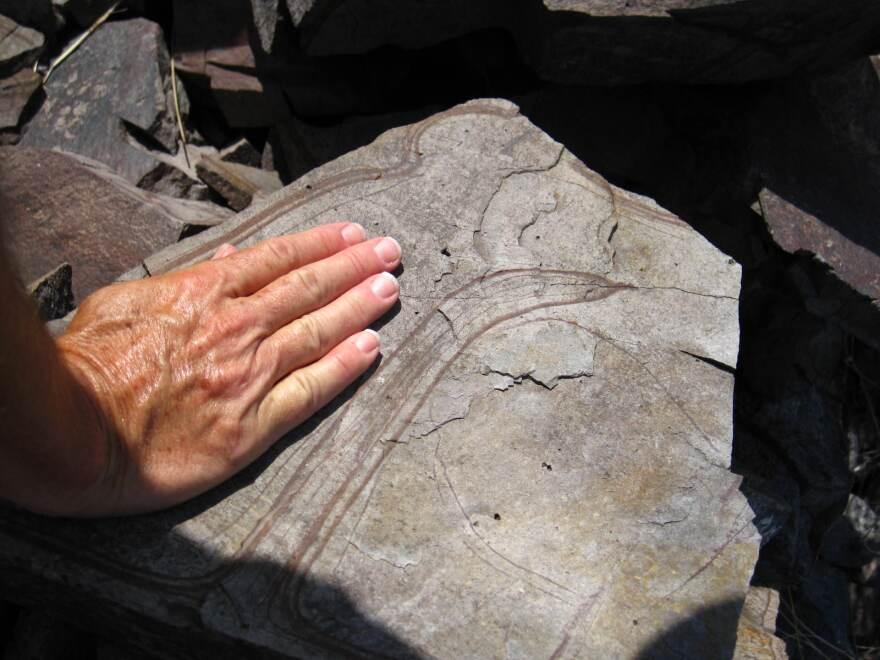 fossil_hand_sharman_apt_russell.jpg