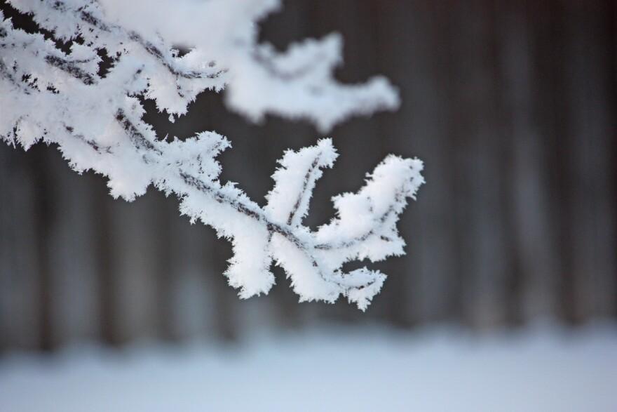 frosty-2.jpg