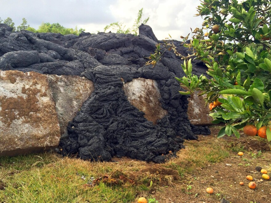 Lava near the leading edge of the flow oozes over a concrete slab and toward a tangerine tree before solidifying near the town of Pahoa on the Big Island of Hawaii earlier this week.