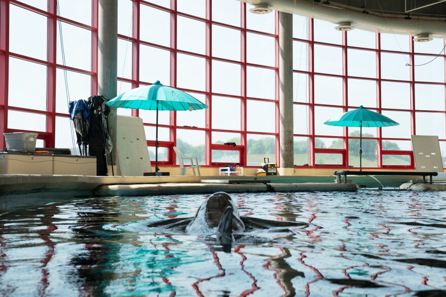 The umbrellas near the National Aquarium's dolphin tanks are meant to prepare the animals for what life will eventually be like in an open air sanctuary.