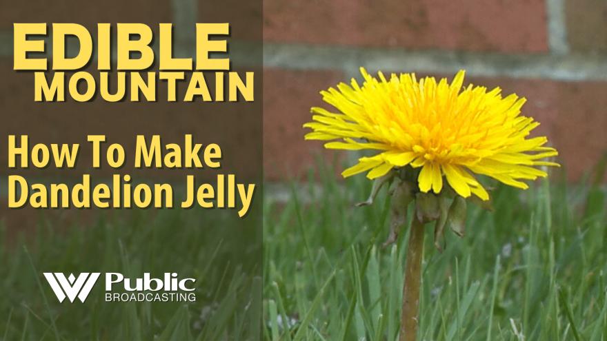 Edible Mountain -  How to Make Dandelion Jelly