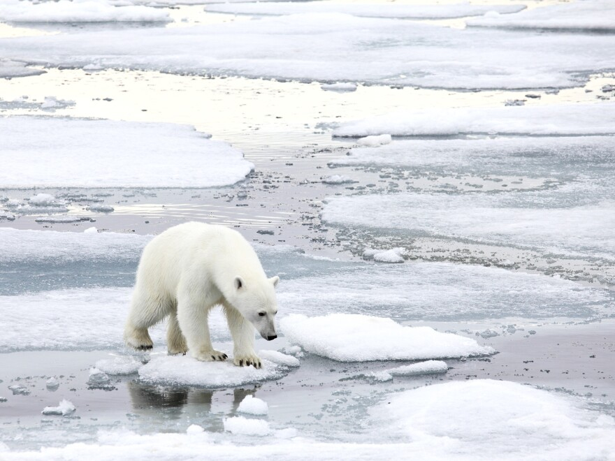 """Climate skeptic Willie Soon <a href=""""https://www.youtube.com/watch?v=AmoKRz5VcbI"""">has argued in the past</a> that too much ice is bad for polar bears. An investigation into Soon's funding found he took money from the fossil fuel industry and did not always disclose that source."""