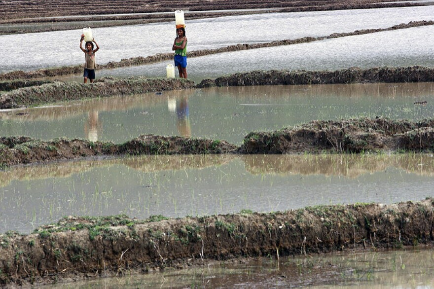 Girls in Vemasse, Timor-Leste carry containers of water across a rice field after heavy rains.