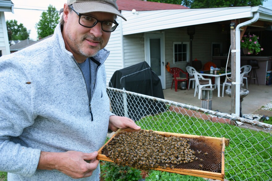 Scott Allred, a beekeeper in Wildwood, collects wayward bee swarms in his free time, like this one he netted in a backyard on May 18, 2020.
