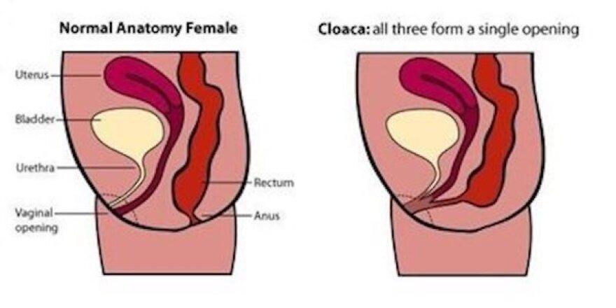 Cloaca_fig-1_0.jpg