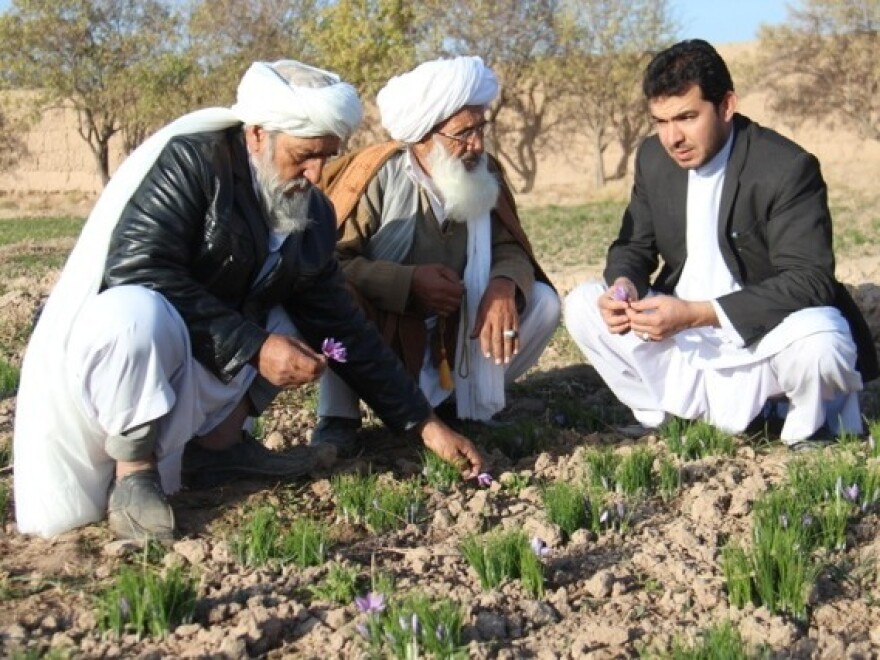 Saffron farmers Haji Zarghon (left) and Haji Ebrahim speak with Abdul Shakhoor Ehrarri, a water applications specialist for Rumi Spice, in Herat Province, Afghanistan during the harvest on Nov. 22, 2014.