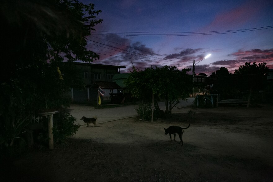 Dogs roam at sunset outside A's grandmother's house in a rural village in the Isaan district. A says life in the countryside is not as much fun as in Phuket, the tourist island known for its nightlife where she lived and worked for most of the last eight years, but that living in her small village close to her family is its own kind of happiness.