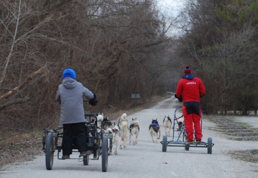n fall and winter, the Breakaway Siberians sled dog team trains several times a week on the Katy Trail near Weldon Spring. January 2017