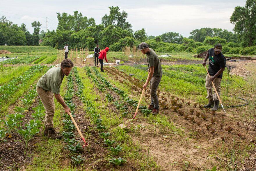 Heru Urban Farming grows food for the community