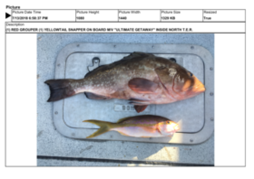 FWC officers wrote that they saw fishing gear on the deck of the Ultimate Getaway and found one red grouper and one yellowtail snapper on ice. It is illegal to fish, or possess fish, in the ecological reserve.