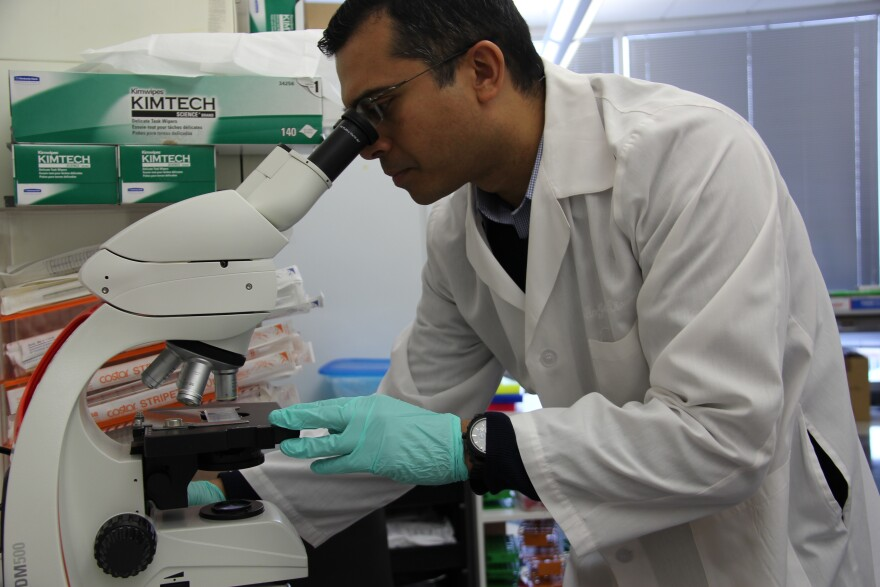 Soumya Chatterjee, a scientist at Saint Louis University, peers into a microscope in his laboratory, where he studies pathogens, such as tuberculosis.