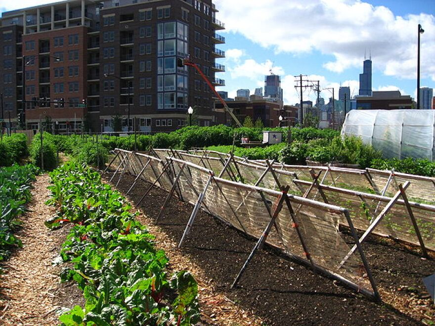 640px-New_crops-Chicago_urban_farm.jpg