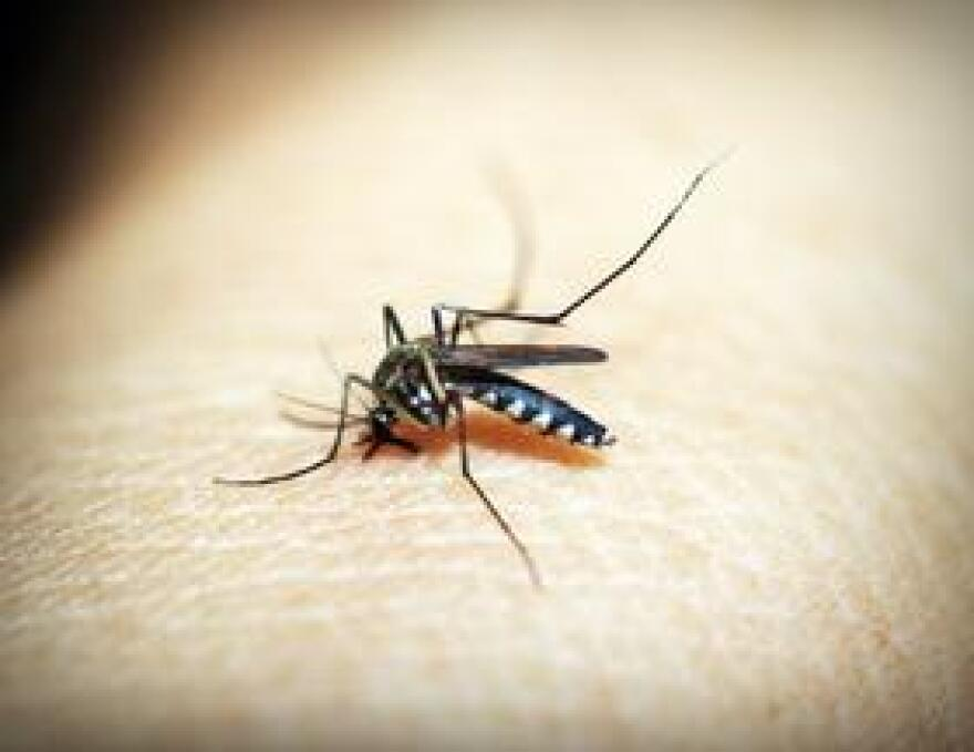Miami is one of the top ten cities in the United States with the largest mosquito population.