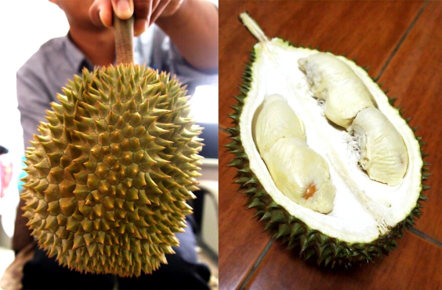 The Longlaplae is a milder tasting durian with almost no aroma.