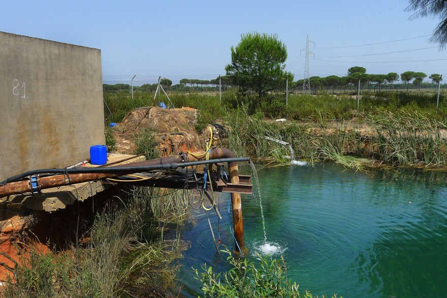 Following GPS coordinates provided by the WWF, NPR was able to locate a secret reservoir in the forest near Doñana National Park, where farmers store water they have sucked out of the aquifer illegally, without permits to drill wells.