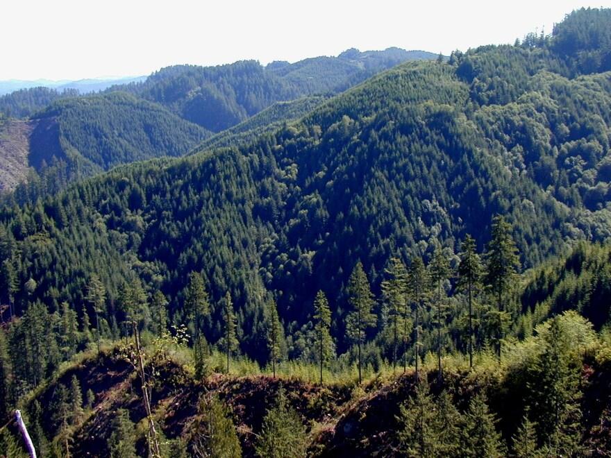elliott_forest_2.jpg
