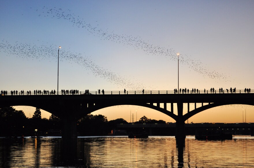 Bats fly out from under the Congress Avenue bridge.