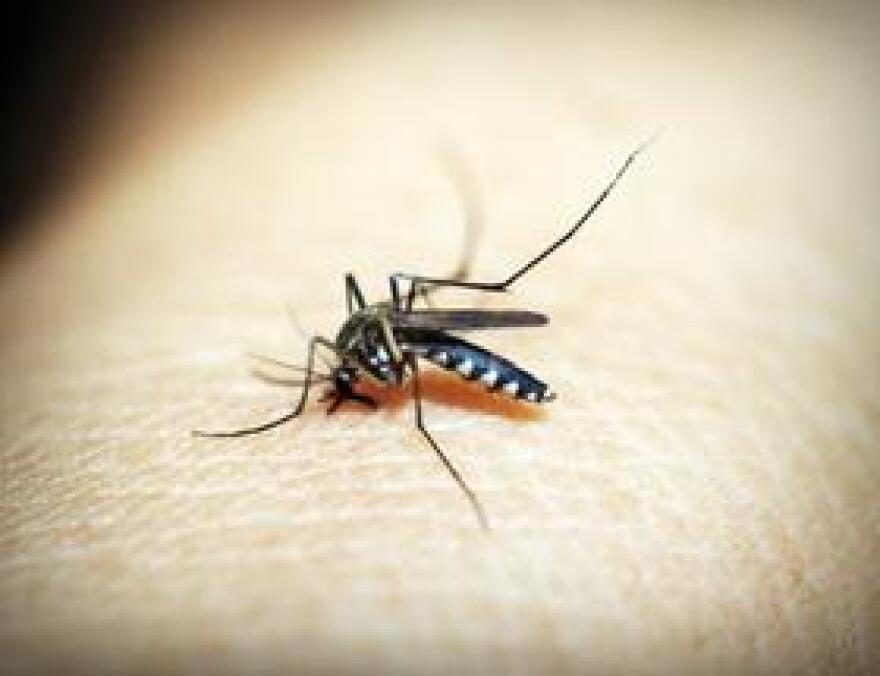 MosquitoSkinPexels0823.jpg