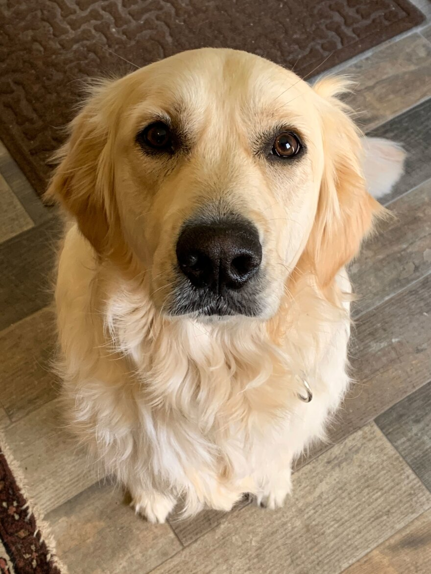 Becky Olsen of Plymouth, Mich. is taking her dog Finn, a 2-year-old golden retriever, to Ohio for a haircut.