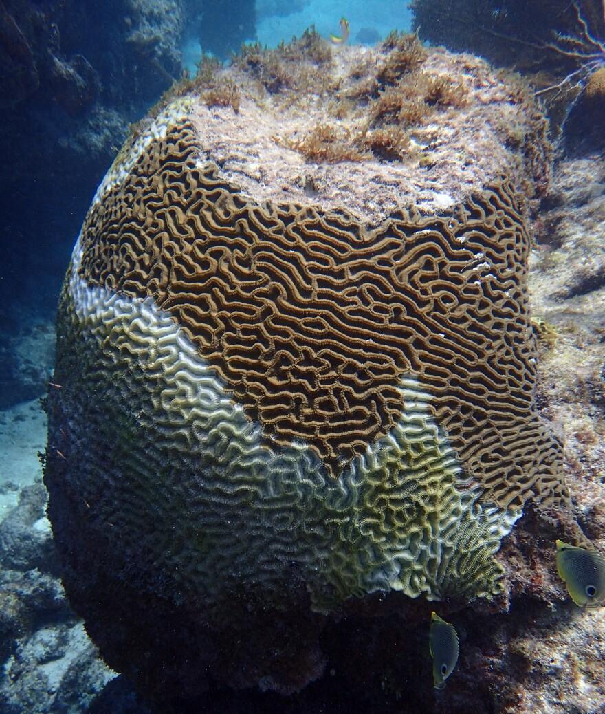coral_disease.jpg