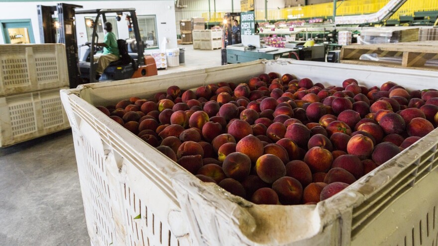 Peaches ready for packing and shipping at Lane Packing, a peach farm in Fort Valley, Ga.
