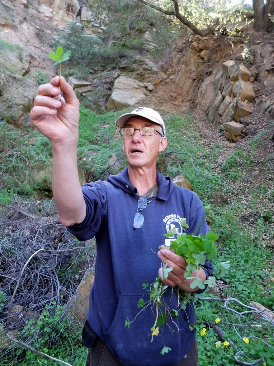 Pascal Baudar, seen on a foraging hike, is the author of <em>The New Wildcrafted Cuisine.</em>