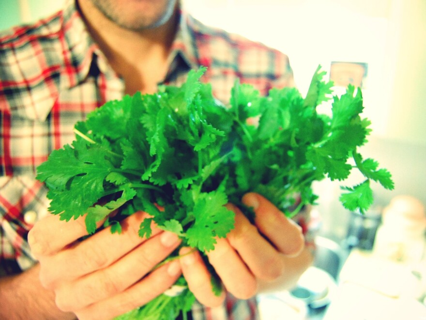 The very sight of this lacy, green herb can cause some people to scream. The great cilantro debate heats up as scientists start pinpointing cilantrophobe genes.