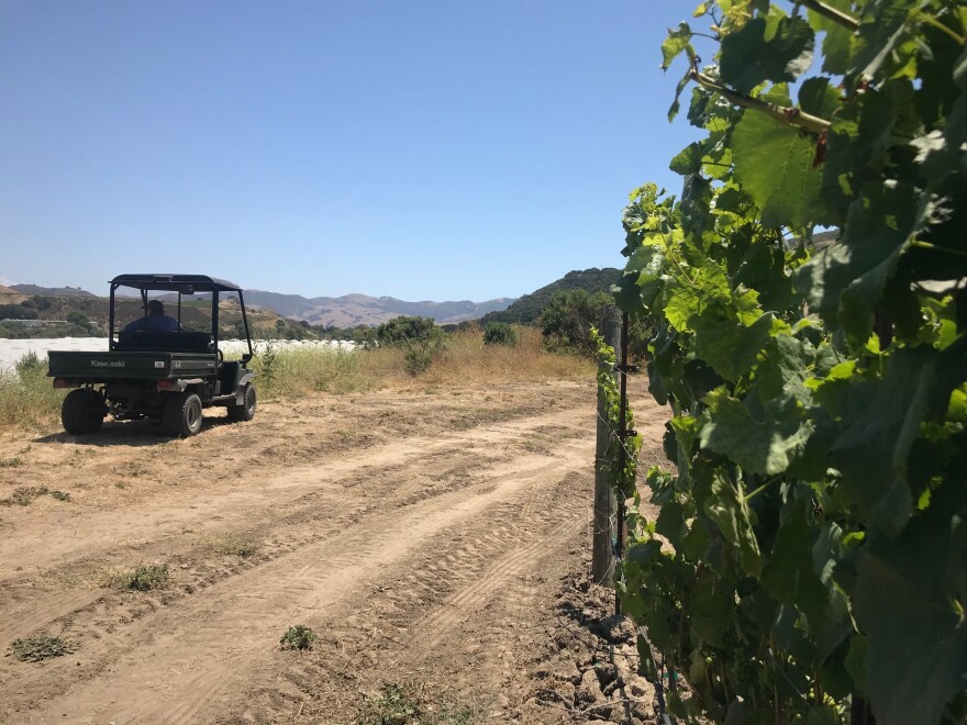 Kathy Joseph looks out over the recently planted cannabis farm from her ATV. Her pinot noir grapevines are growing to her right.