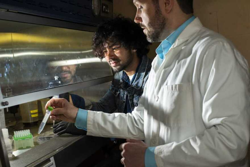Professor Joe Horzempa works in the lab with student, Umesh Nepali, who takes a tissue culture as part of his study of host-pathogen interactions.