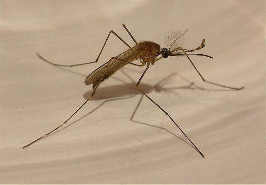 mosquito_flickr_creative_commons.jpg