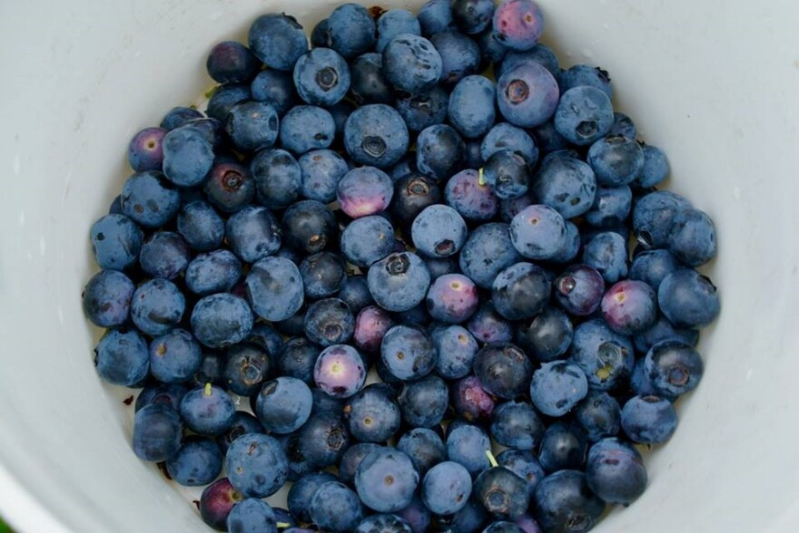 A bucket filled with blueberries.