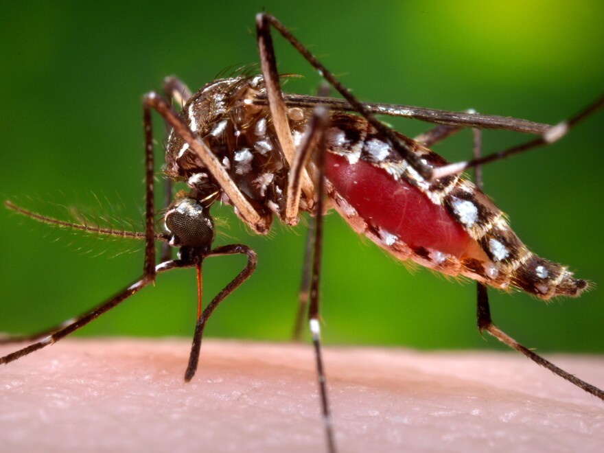 U.S. health officials are telling pregnant women to avoid travel to Latin America and Caribbean countries with outbreaks of Zika, a tropical illness linked to birth defects.