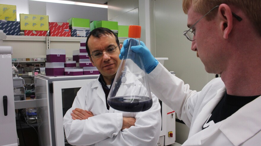 Mattheos Koffas (left), a biochemical engineer at Rensselaer Polytechnic Institute, and Andrew Jones, a graduate student in his lab, with a flask of microbe-produced antioxidants.