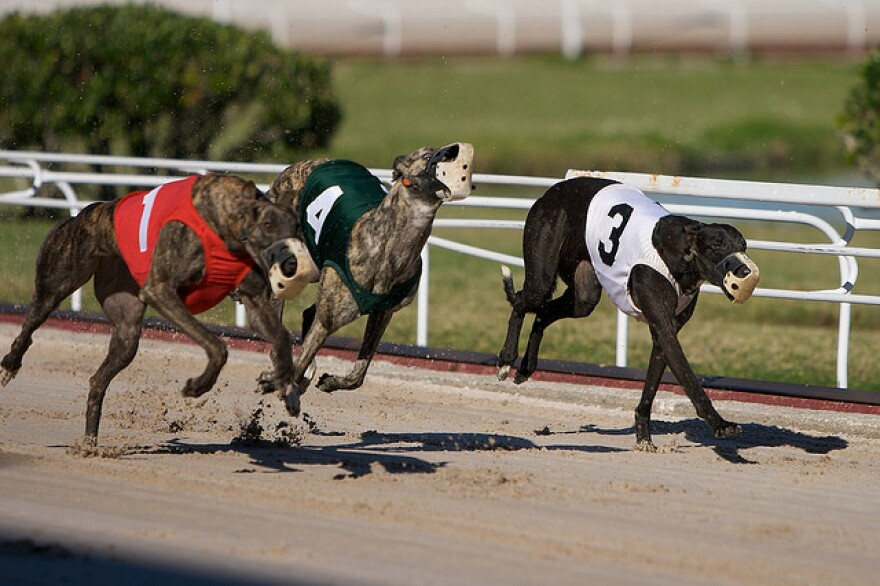 Christopher D'Arcy, owner of D'Arcy Kennel LLC in St. Petersburg, wants a judge to order the state to pay damages for the loss of value of his property, including racing dogs that the lawsuit said could previously be sold for up to $50,000.