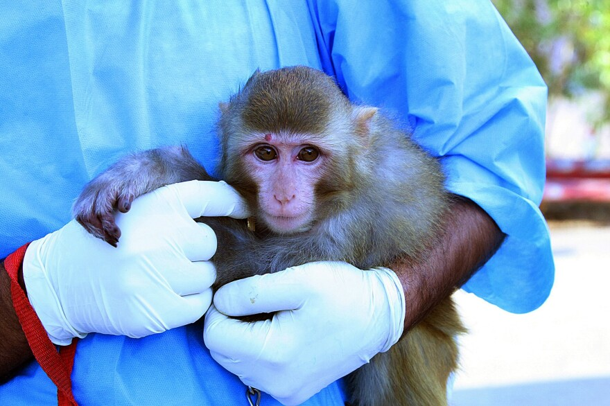 The monkey Iranian authorities said was sent to space in January.